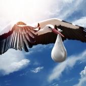 https://pixabay.com/pl/photos/ptak-charakter-skrzyd%C5%82o-niebo-lot-3058712/